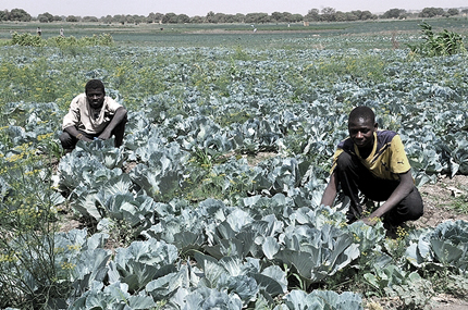 Eighty-two thousand farmers have so far been registered in Bauchi State